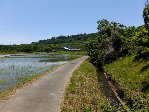葉山島の田んぼと小河川