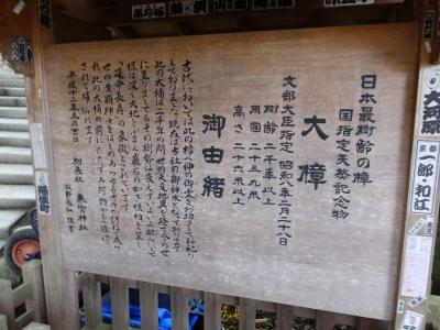 来宮神社の大樟(大楠)・案内板
