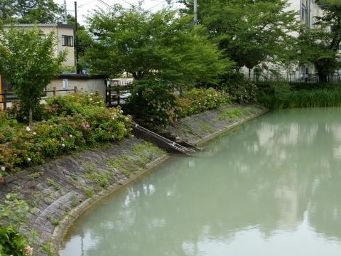 ため池百選・月見が池南側堰堤