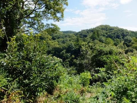 桂川左岸崖上からの眺め