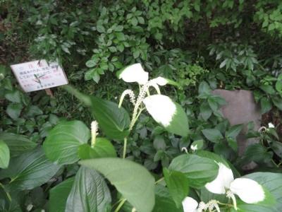 gyouji20200604-12.jpg