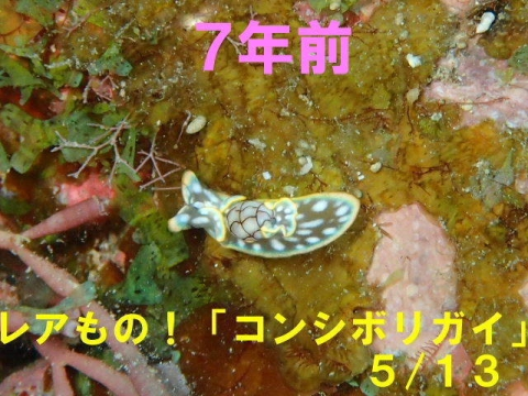 2020_0511-2013_0513.jpg