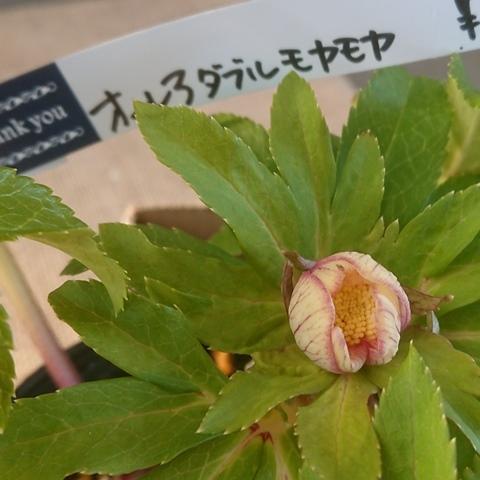 shikoku210109d.jpg