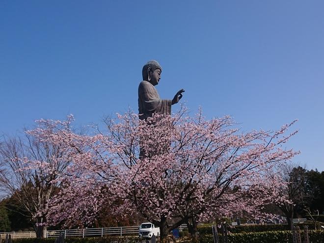 ushikudaibutsu210311.jpg