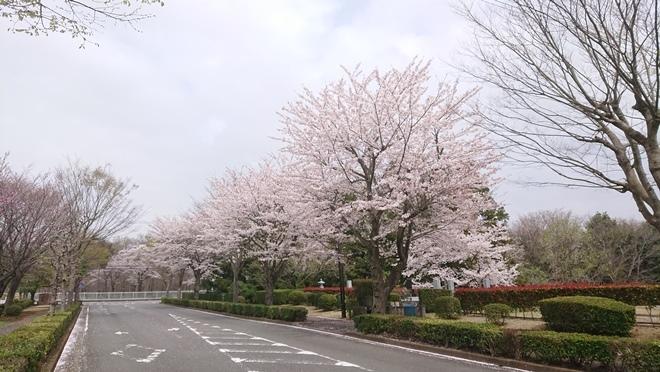 ushikudaibutsu210401c.jpg