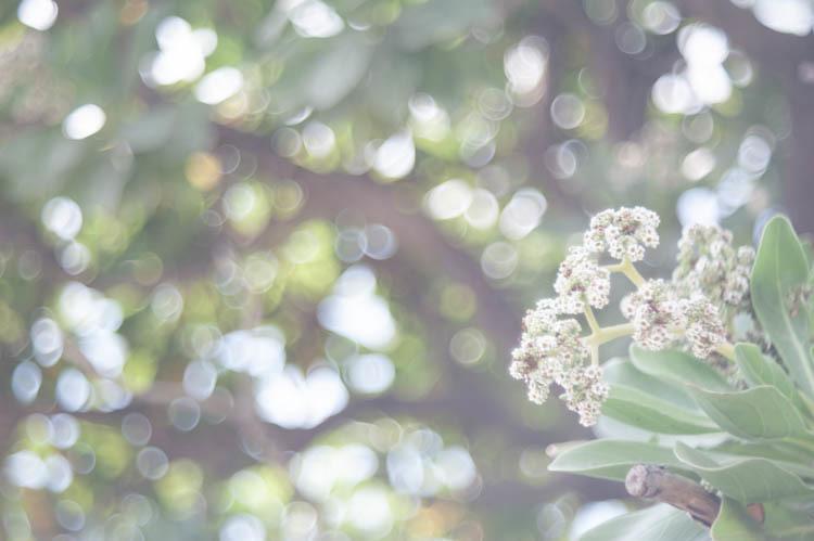blog-0073.jpg
