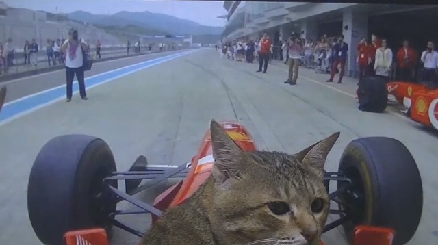 F1運転する猫