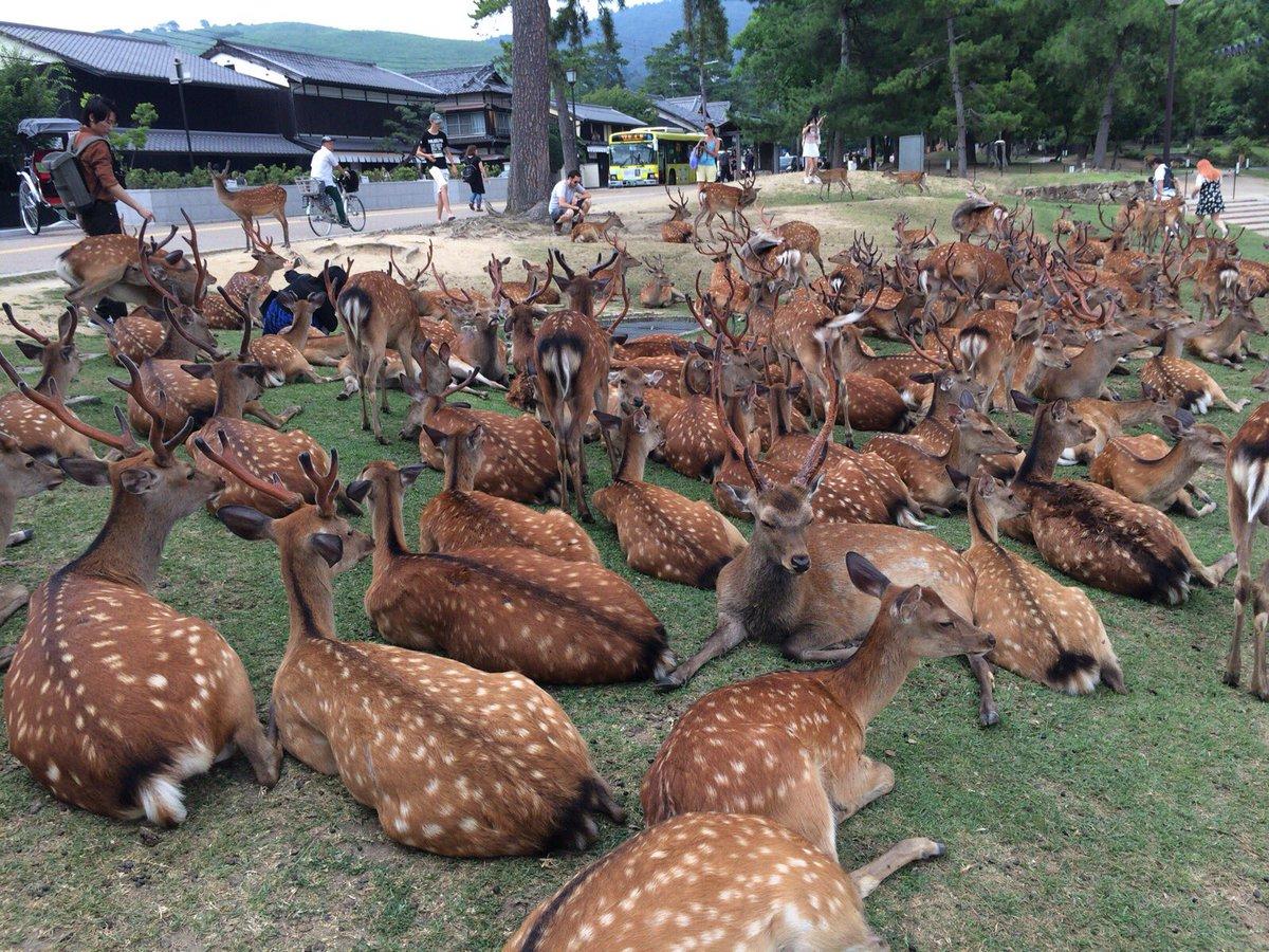 DFkNOFmUQAA5wfm日本のエベンギ族の聖地