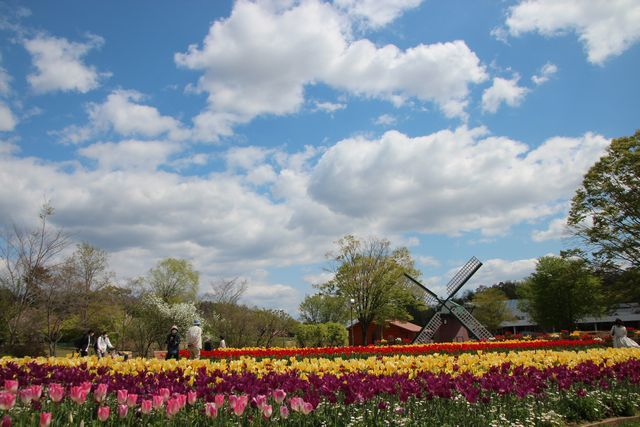 IMG_7836風車前花壇