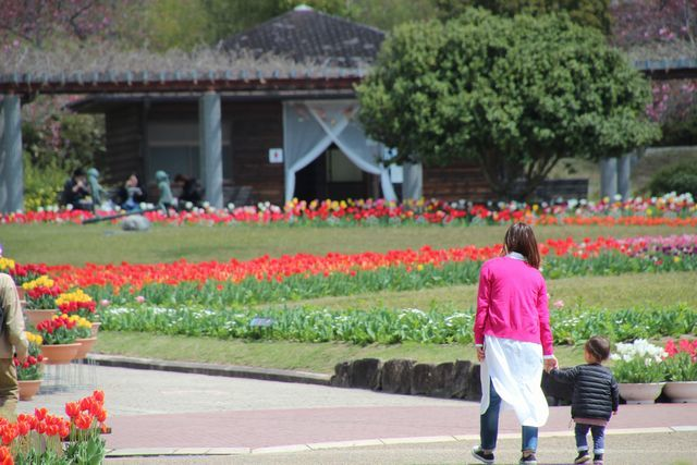 IMG_7841四季の花壇