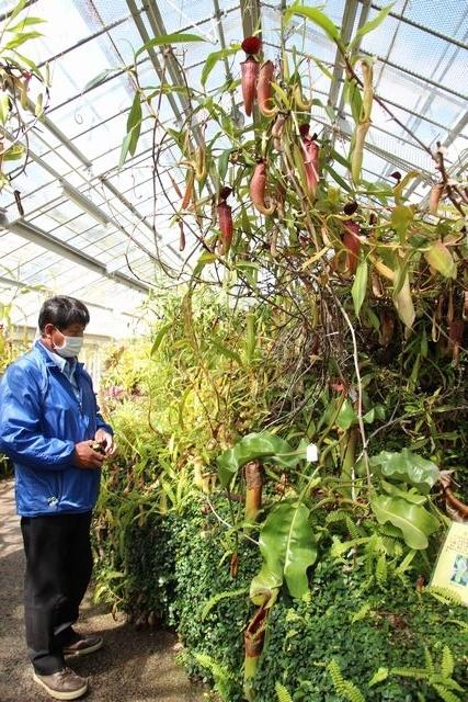 IMG_7879食虫植物室