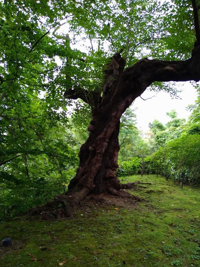 千秋公園 木