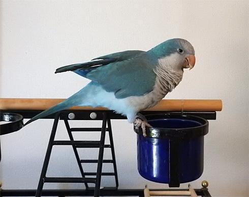 foo_birdcolor1_1