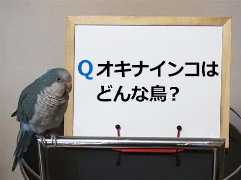 foo_quakerparrot1_1
