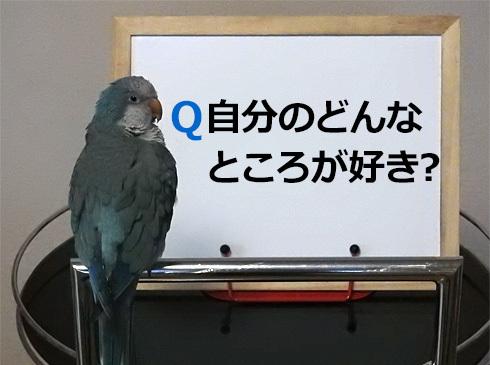 foo_quakerparrot2_1
