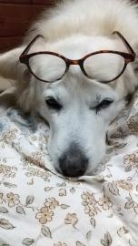 メガネせんべいDSC_0015
