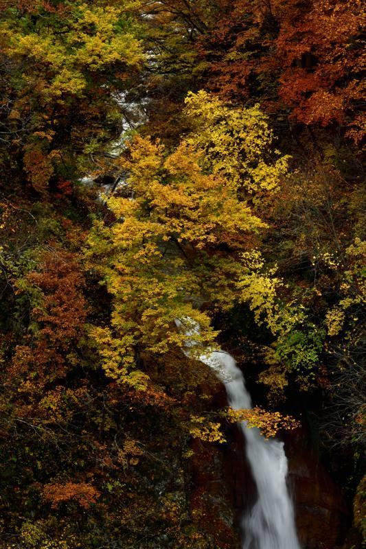iiyama202011_00295_00001秋山郷蛇淵の滝take1b