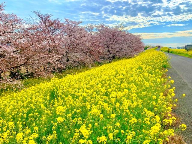 70 熊谷桜堤 (3)