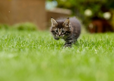 cat-4419763_1920.jpg