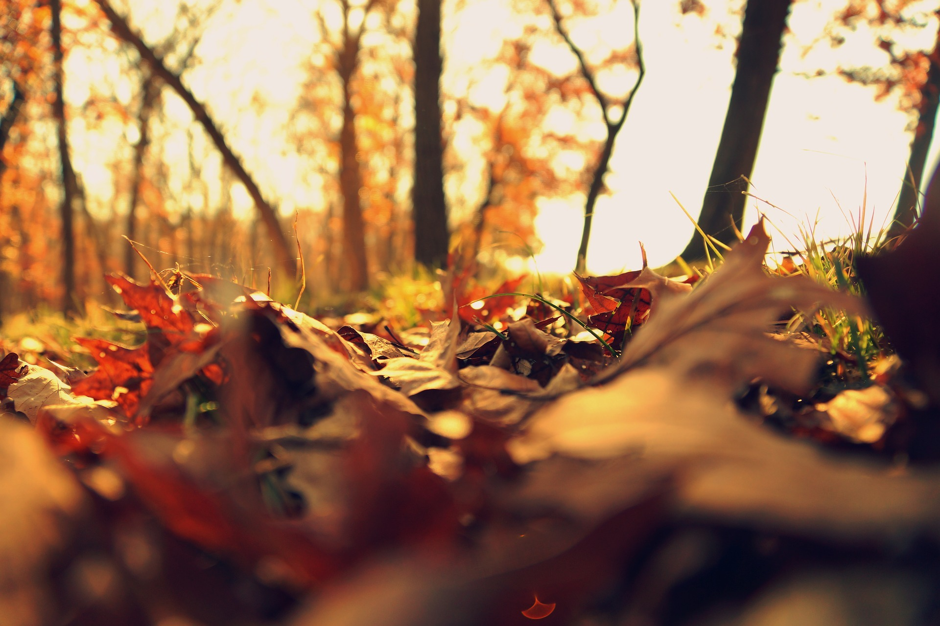 fall-2255303_1920.jpg