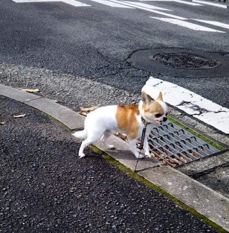200326-小太郎散歩-1