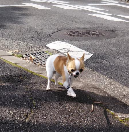 200326-小太郎散歩-3