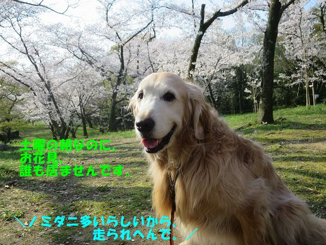 IMG_7568_20200404193825e9c.jpg
