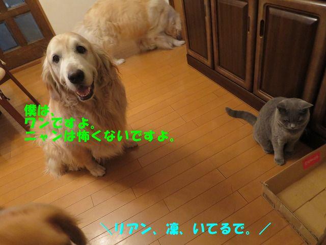 IMG_7648_2020071316030127f.jpg