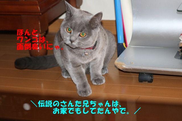 IMG_7940.jpg