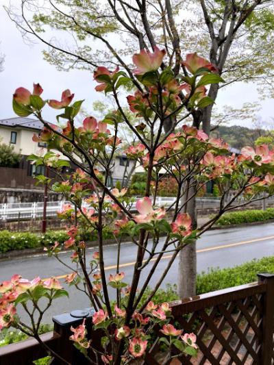 20210413hanamizuki_convert_20210414130149.jpg