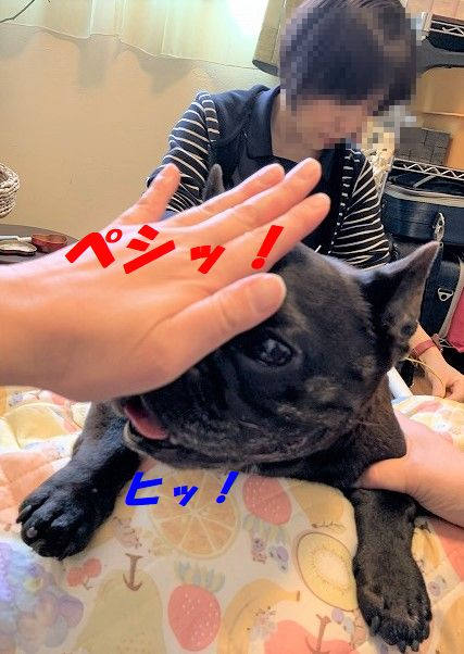 IMG_0385(1).jpg