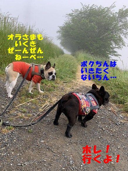 IMG_1616(1).jpg