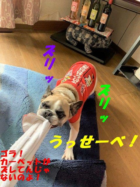 IMG_2847(1).jpg