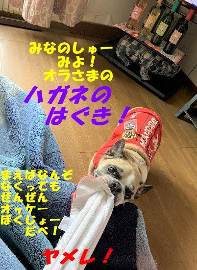 IMG_2848(1).jpg