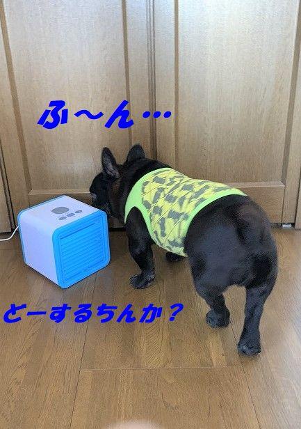 IMG_3355.jpg