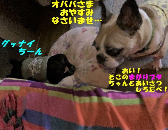 IMG_3641(1).jpg