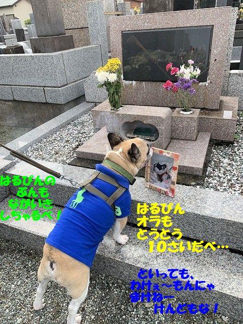 IMG_4614(1).jpg