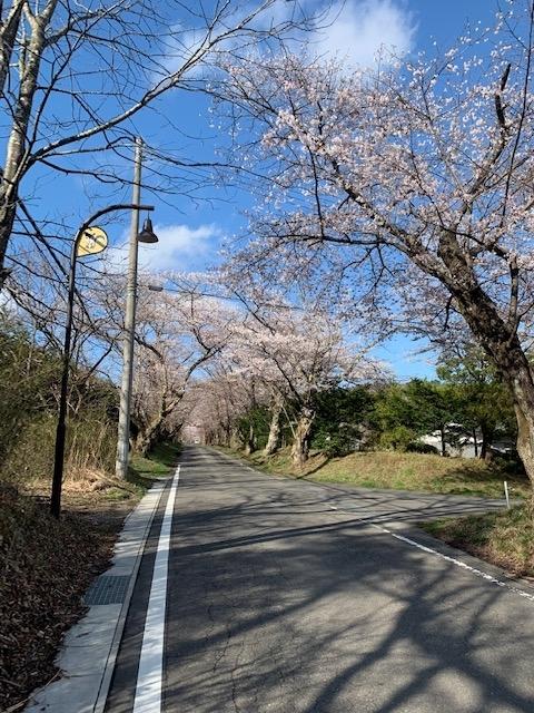 20210405sakura.jpg
