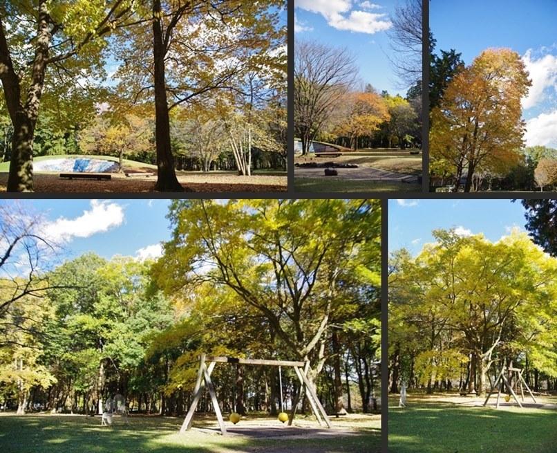 IMGP3450-horz-vert.jpg