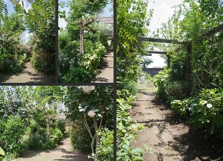 IMGP4503-horz-vert-horz.jpg