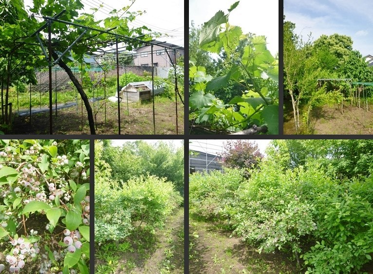 P2680059-tile-vert.jpg