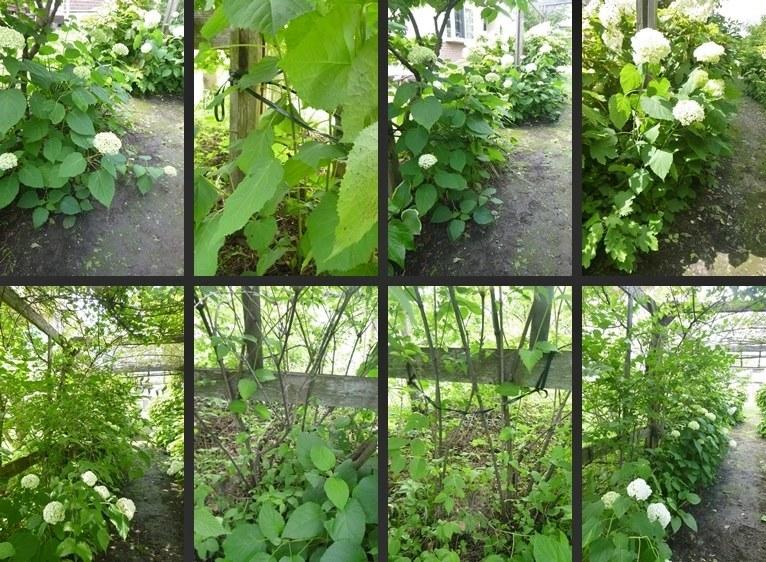 P2680581-horz-vert.jpg