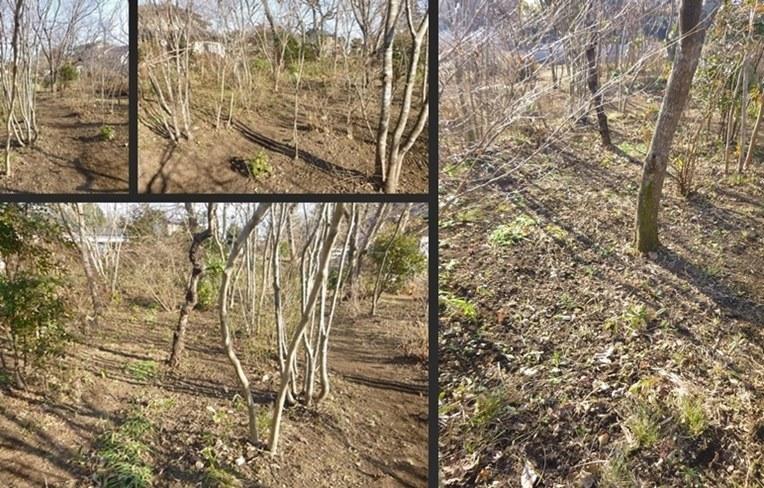 P2730398-horz-vert-horz-horz.jpg