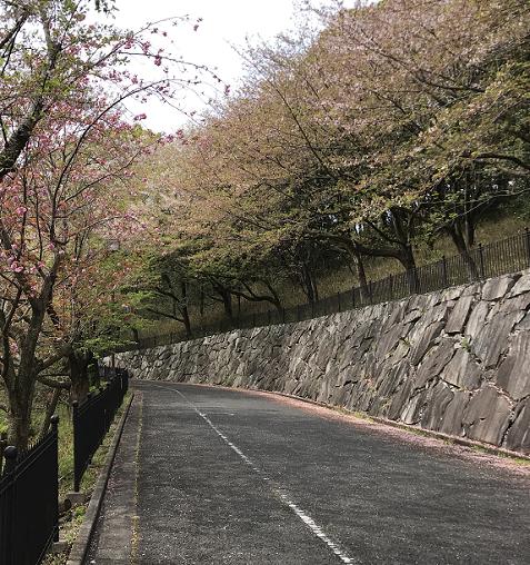 20200415飯山総合運動公園2