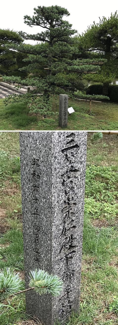 20200630中津万象園 松