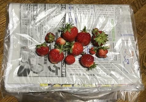 20200706苺