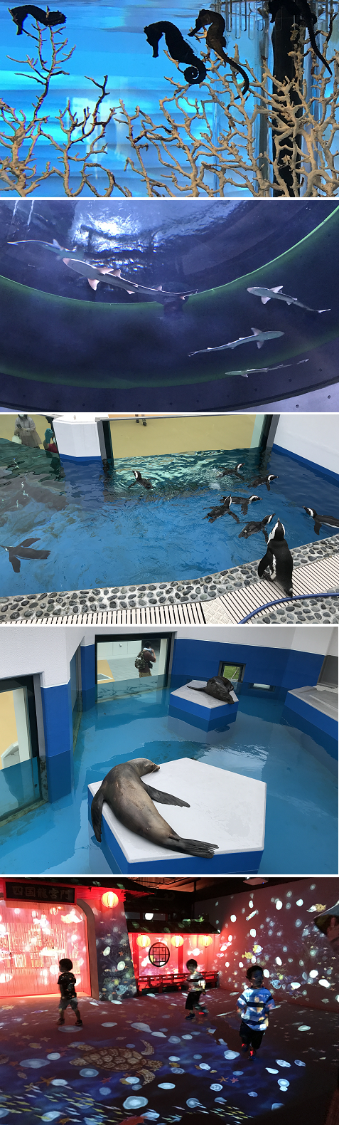 20200708水族館4