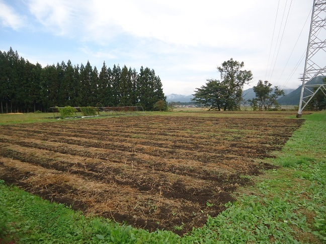 廃止した畑