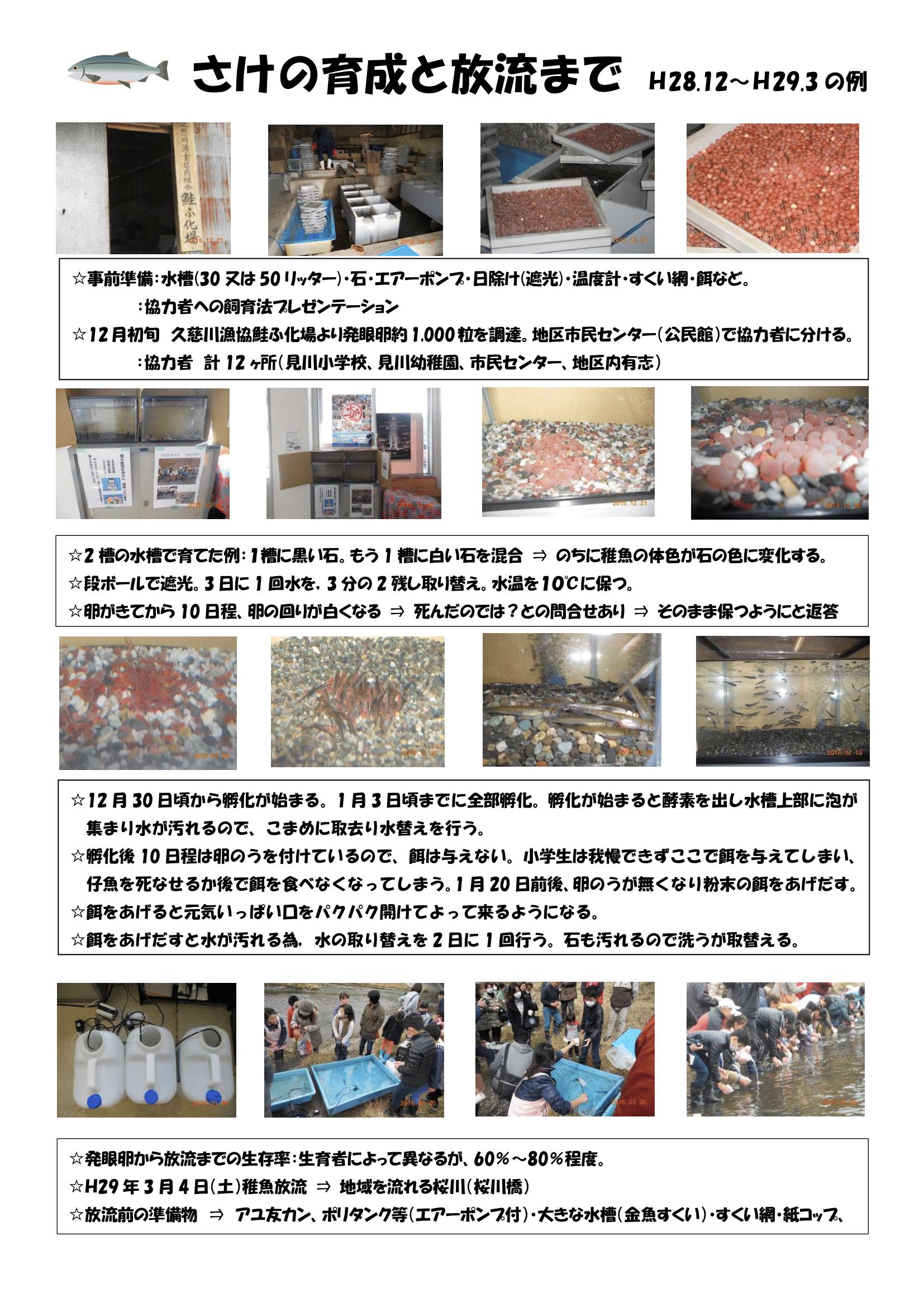 サケ放流活動