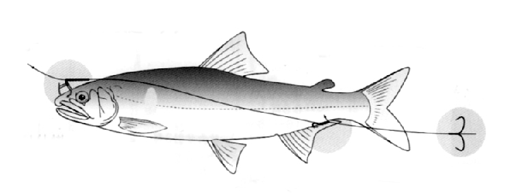 図-2 アユ友釣りの標準的な仕掛け